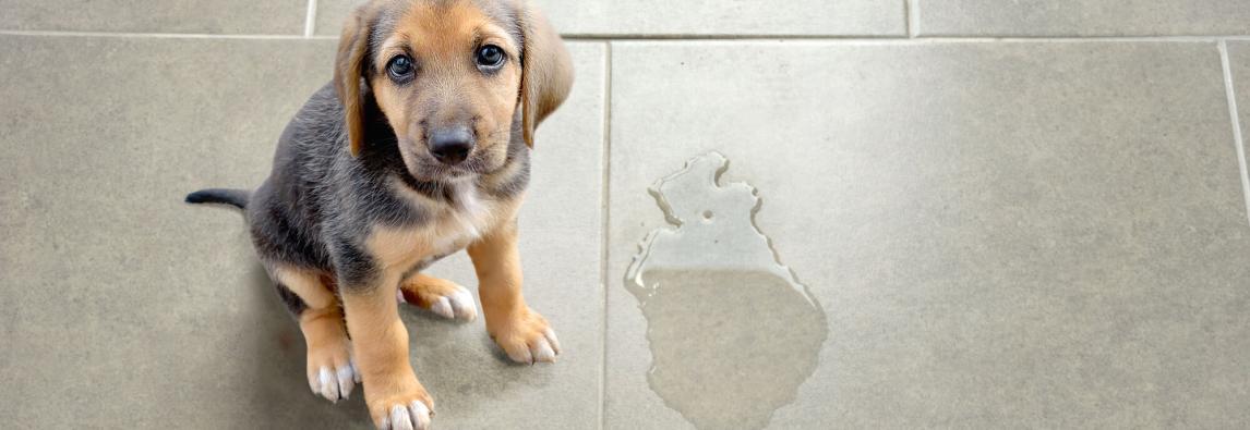 Como Cuidar Do Mau Cheiro No Animal e No Ambiente