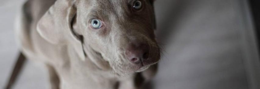 Conheça as doenças de inverno que atingem cachorros e como evitá-las