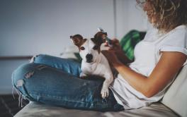 Sites reúnem 'babás de pets' que hospedam animais de outras pessoas